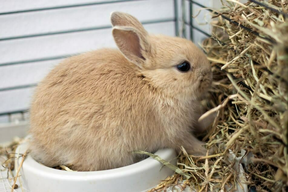 Unter anderem wurden auch völlig verwahrloste Kaninchen gerettet. (Symbolbild)