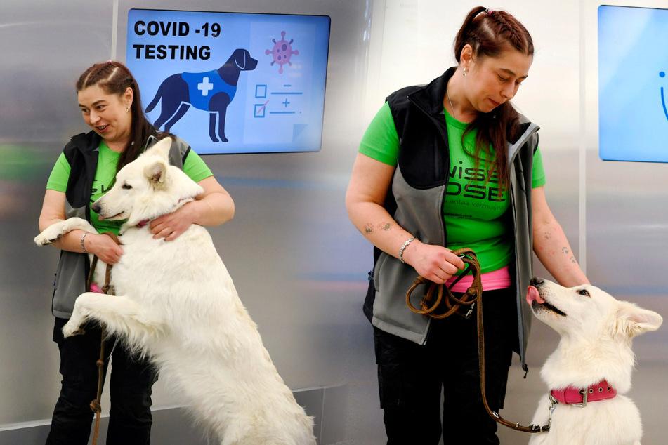 Der Covid-19-Spürhund E.T. sitzt hinter einer Absperrung am Flughafen Helsinki-Vantaa. Das Tier ist in der Lage Corona-Infektionen bei Menschen erschnüffeln zu können.