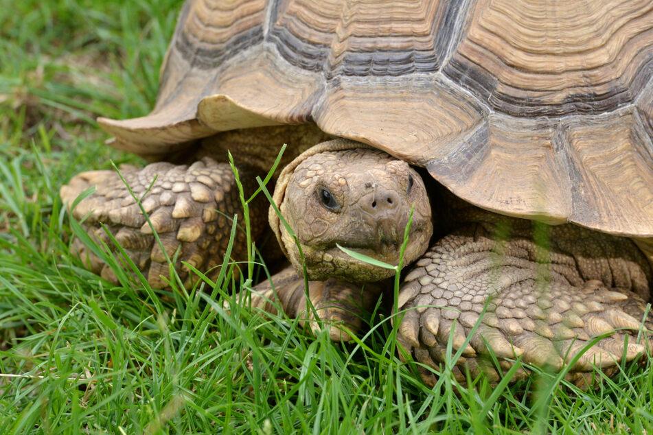 Die Schildkröten gehören zu den kleinsten Tierarten im Freizeitpark.
