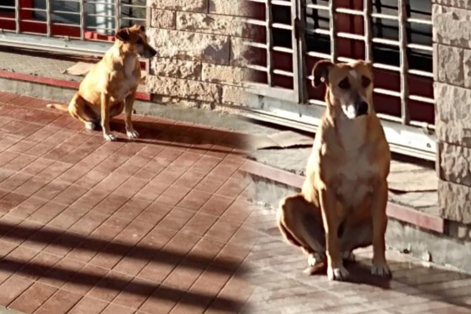 Bitteres Ende: Hund wartet seit einer Woche auf sein Frauchen