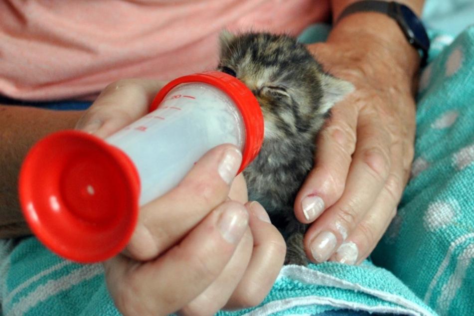 Flaschenkind Urmel ist kaum so groß wie eine Hand.
