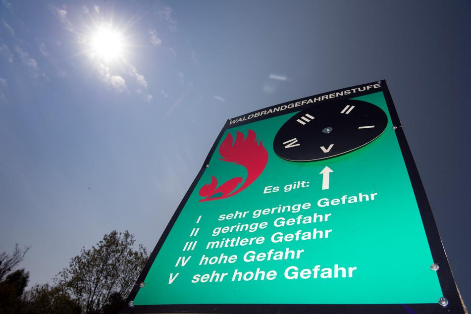 Höhere Waldbrandgefahr durch trockene Böden in Thüringens Wäldern