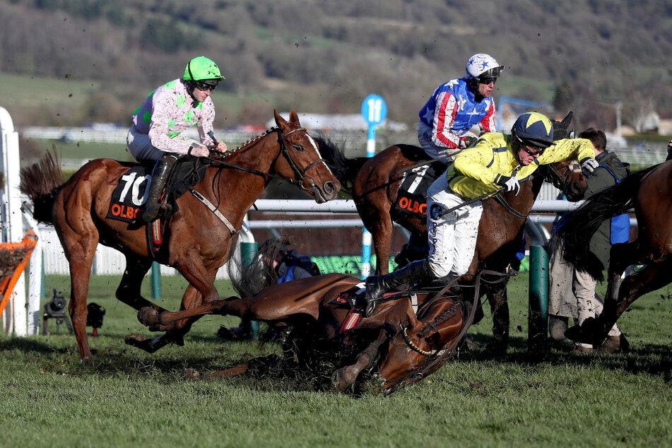 Das Cheltenham Festival lockte auch dieses Jahr unzählige Pferdesport-Begeisterte an.