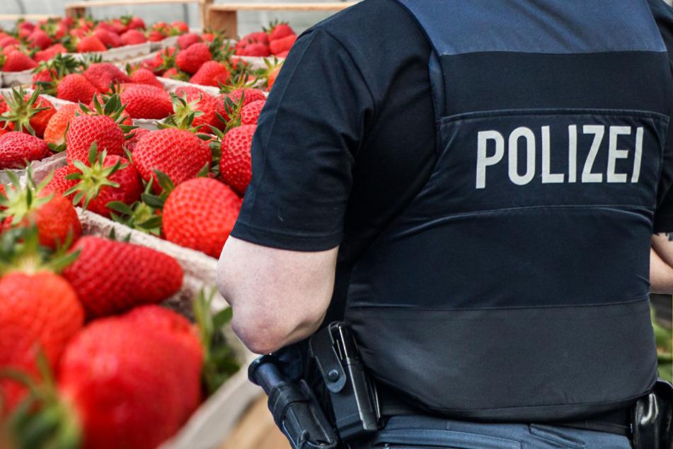 Schläger raubt Erdbeerstand aus: Fahndung der Polizei in Südhessen