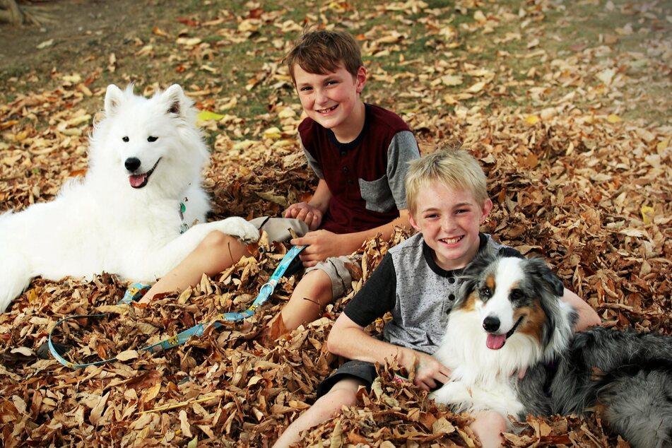 Hunde haben ihre eigenen Bedürfnisse und Rechte, die Kinder frühzeitig lernen sollten.