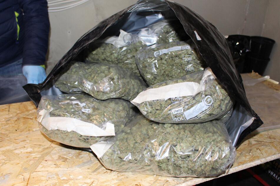 Polizei findet mehrere Kilo Drogen und Hunderte Cannabis-Pflanzen
