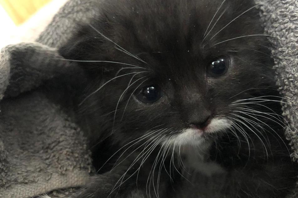 Kätzchen Garfield ist inzwischen vier Wochen alt.