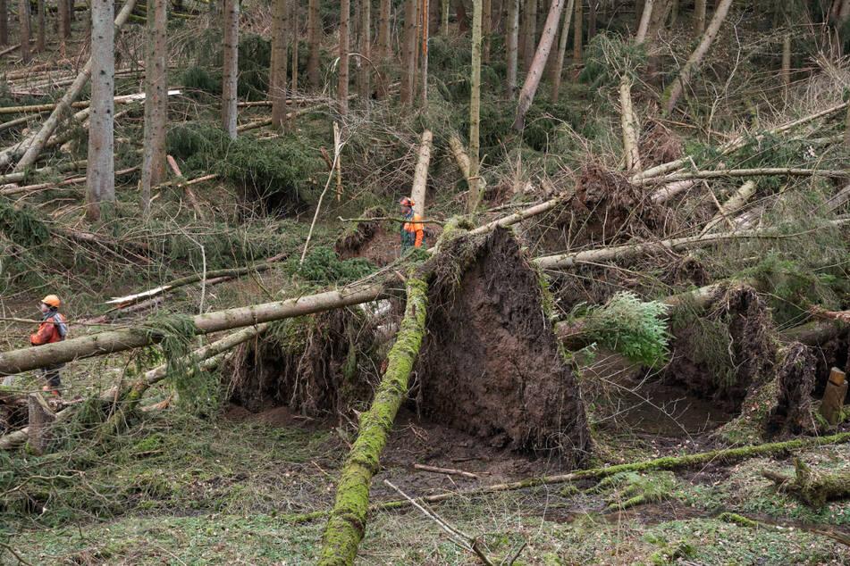 Waldbesitzern soll nach Unwetterschäden geholfen werden. (Symbolbild)