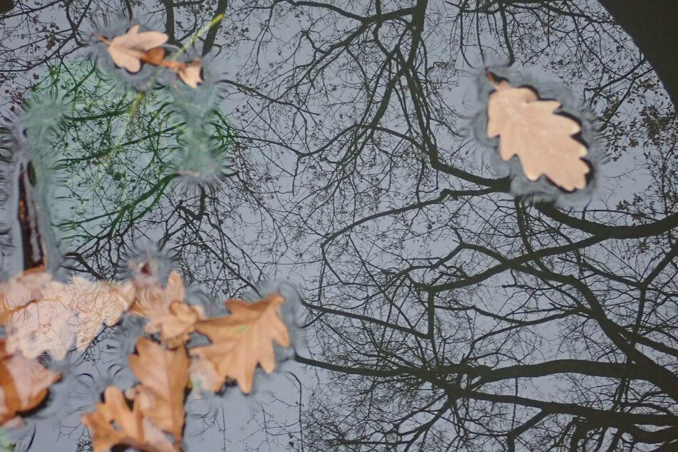 In Sachsen startet die Woche mit Wolken, Regen und Sturmböen. (Symbolbild)