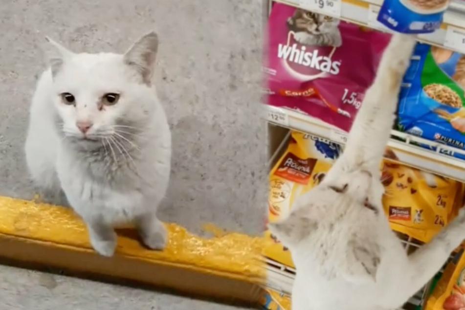 Erst saß die Katzen vor dem Markt (links), dann zeigte sie begeistert auf ihr Lieblingsfutter.
