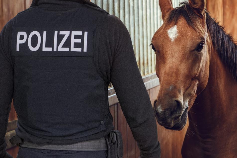 Pferde-Ripper verletzt Stute im Genitalbereich