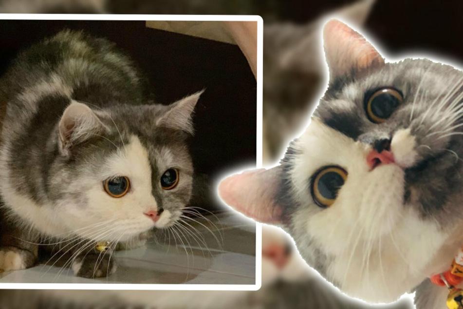 Nanu? Kätzchen Chimera ist nicht nur neugierig, sie ist auch ein richtiger Hingucker!