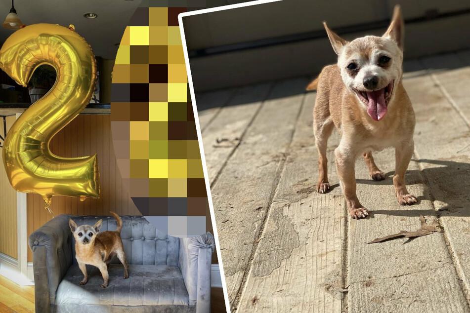Vor 2000 geboren: Ihr glaubt nie, wie alt dieser Hund ist!