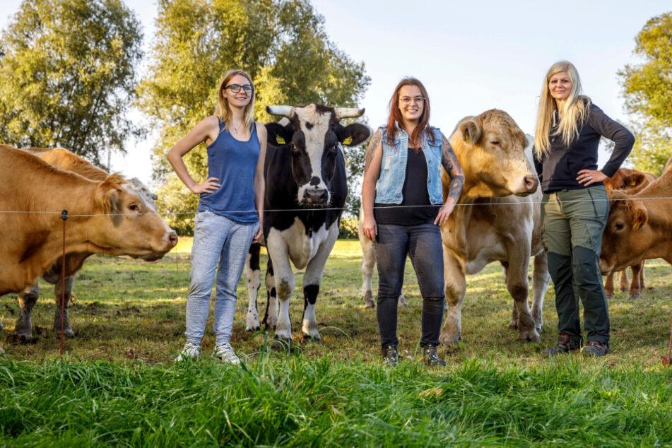 Kuh-Retter bewahren Tiere vor Schlachtbank: Bei Conny & Co. haben Rinder richtig Schwein