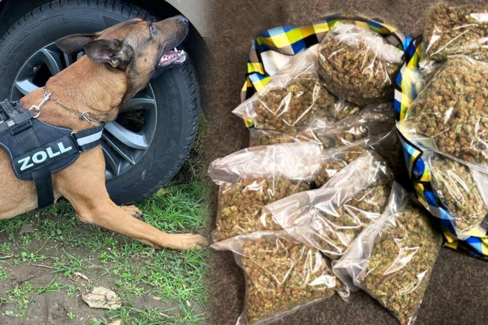 """23 Kilo Drogen! Hund """"Gunnar"""" erschnüffelt wertvolle Fracht"""
