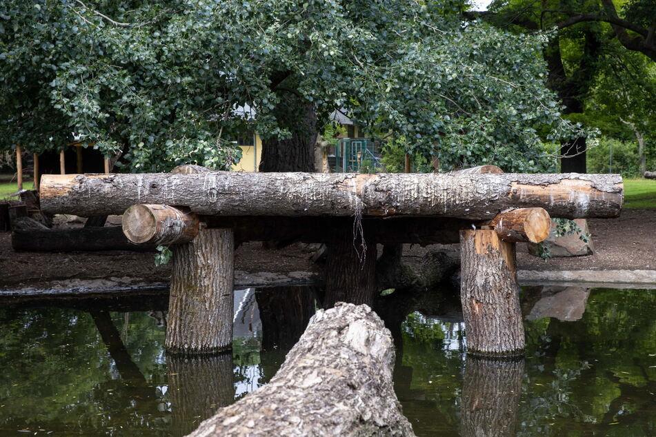 Die neue Brutplattform gefällt den Pelikanen nicht.