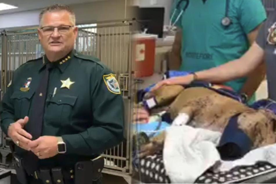 Hund mit schweren Verletzungen gefunden: Tierarzt äußert grausamen Verdacht