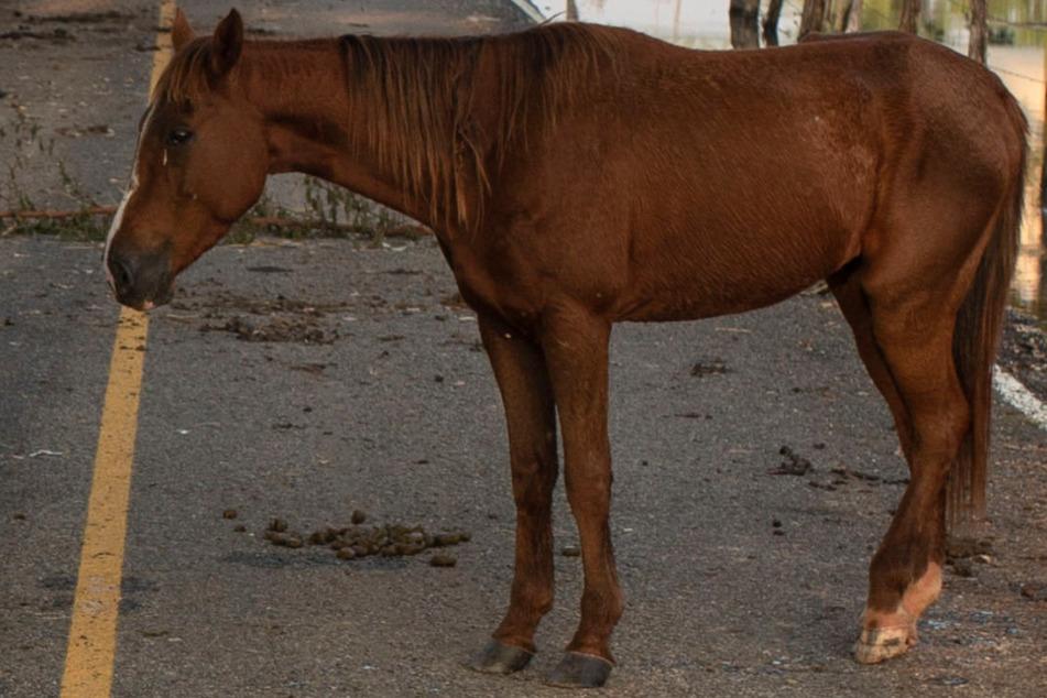 Das Pferd rannte auf eine Bundesstraße. (Symbolbild)