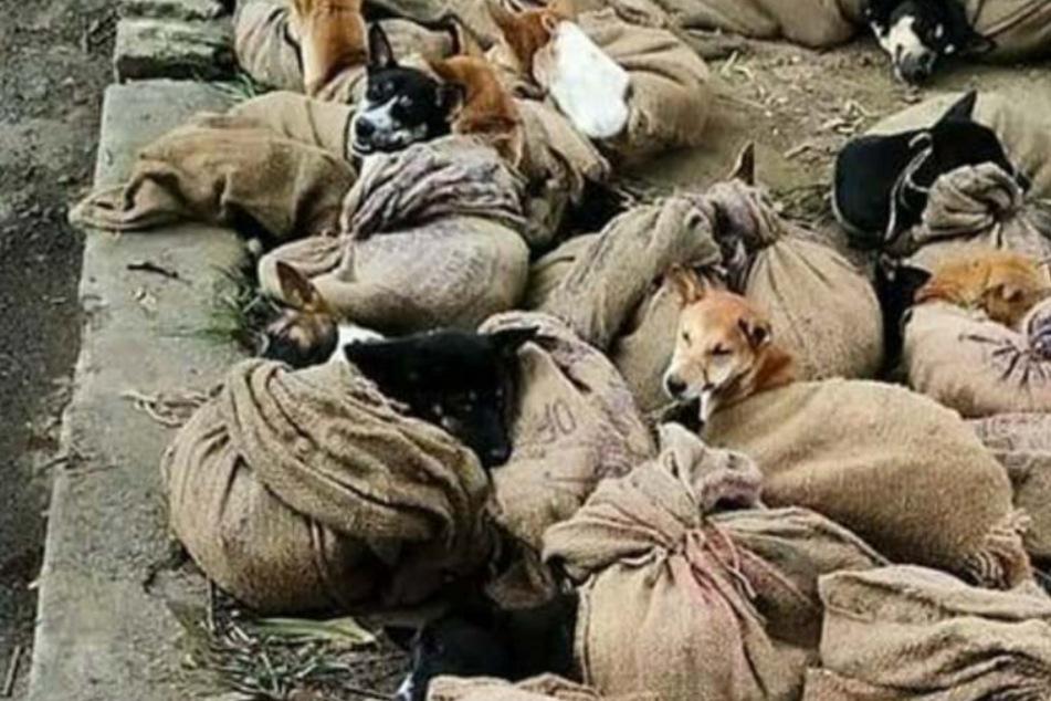 Hundefleisch: So grausam werden die Tiere bis zu ihrem Tod gequält
