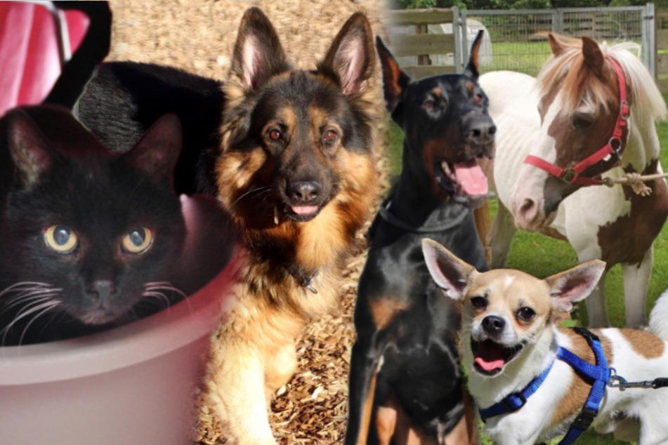 5 besondere Tiere: Hunde, Katze und ein Pony suchen endlich ein Zuhause