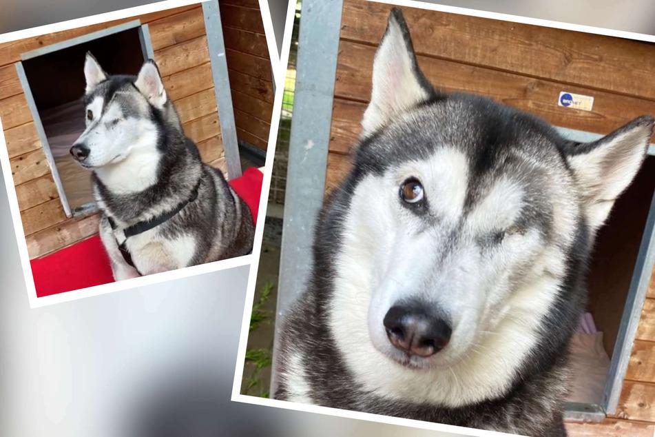 Einäugiger Hund musste jahrelang für Taten des Besitzers mit büßen