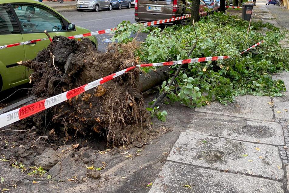 Nach heftigem Unwetter in Berlin: Warnung vor abbrechenden Ästen!