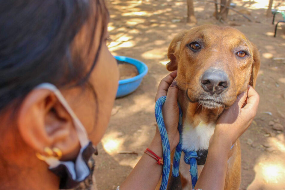 Dog gets help, but he's still feeling blue and his rescuers can't figure out why