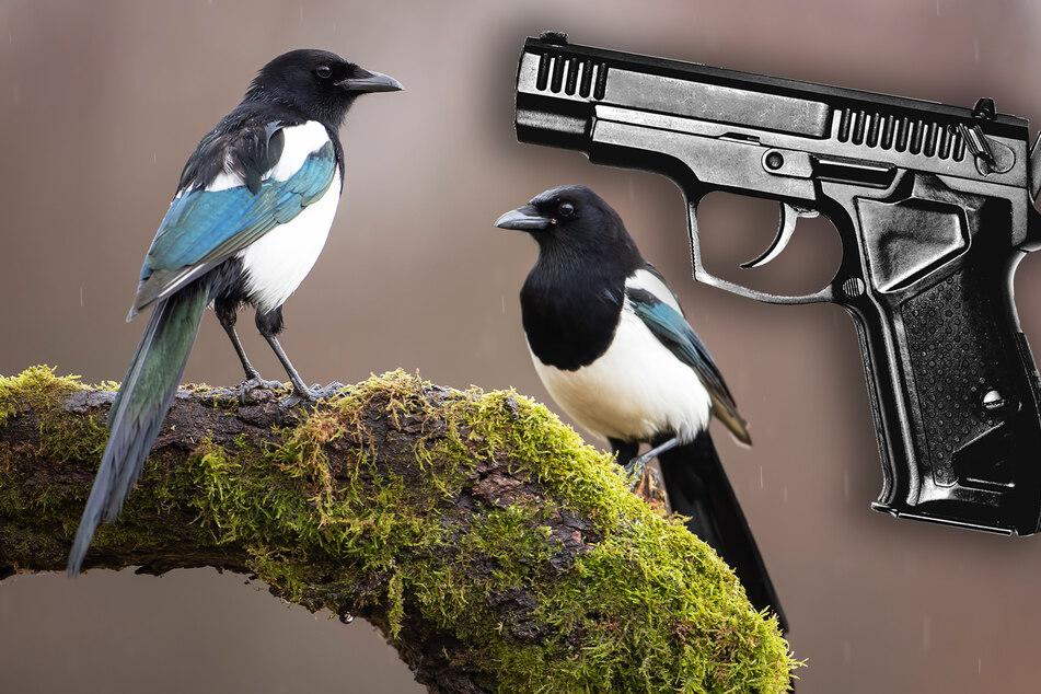 """32 Mal! Mann entwickelt """"Hassliebe"""" zu Vögeln und schießt sie vom Balkon"""