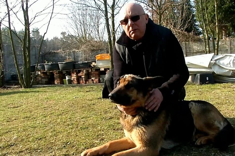 Polizei jagt Tierquäler! Zweiter Anschlag auf Schäferhunde