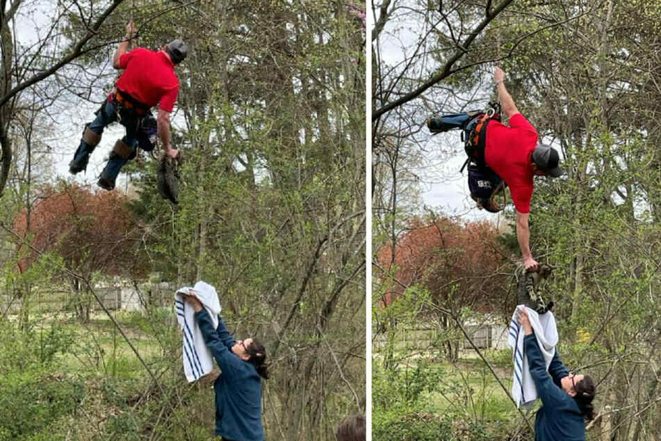For more than two weeks, Sparkles the cat was stuck in a tree, and it took a professional to rescue the animal.