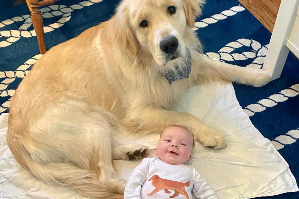 Golden Retriever Hinckley and Baby Teddy are inseparable.