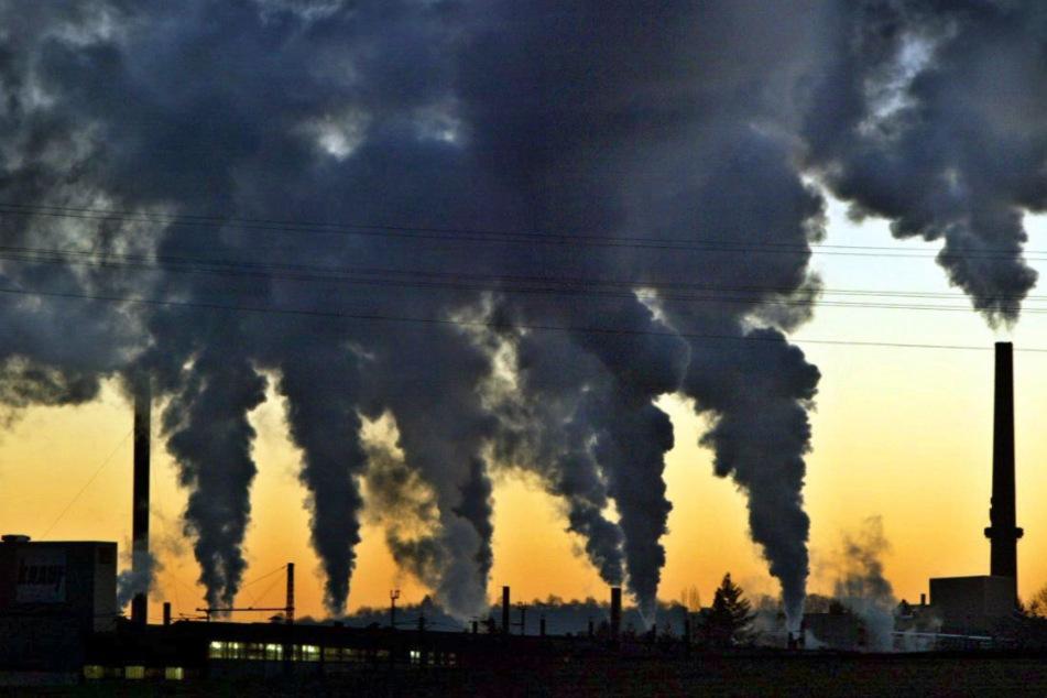 Grünen-Landes-Chef Hallitzky fordert mehr Klimaschutz bei Corona-Exit