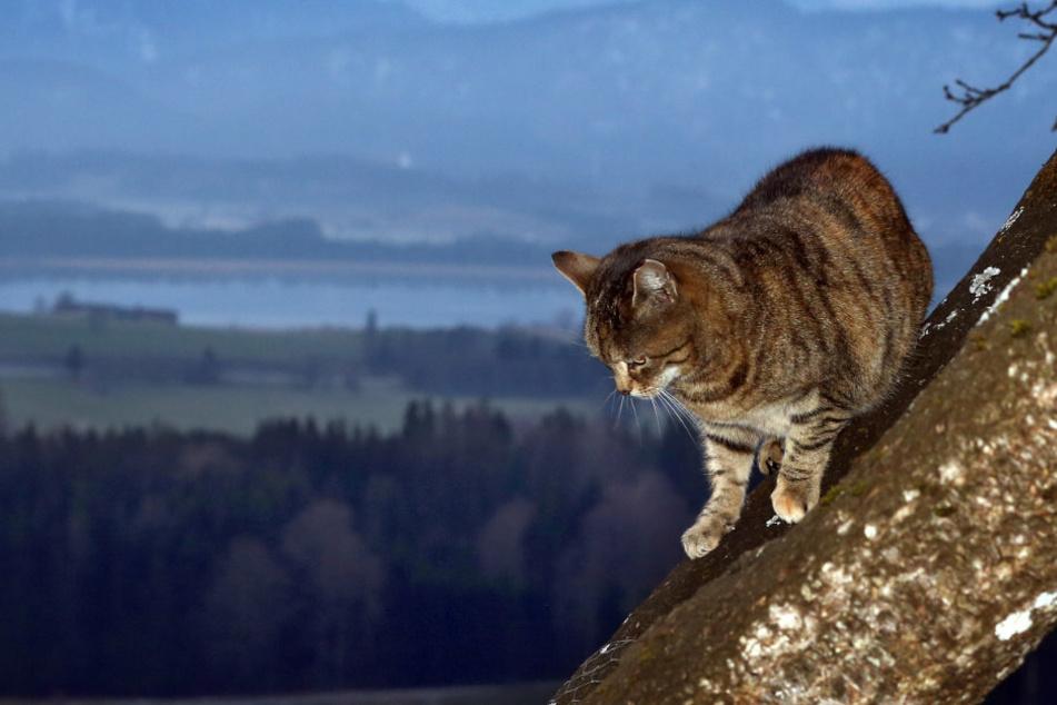 Eine Katze sitzt auf einem Baum (Symbolbild).