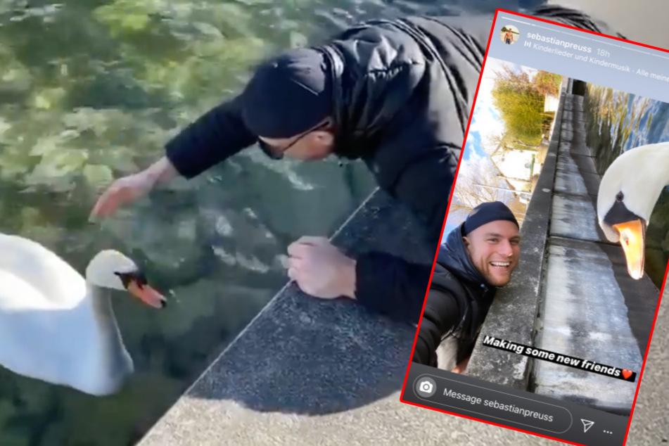 Sebastian Preuss (30) geht auf Kuschelkurs mit einem Schwan am Starnberger See. (Bildmontage)
