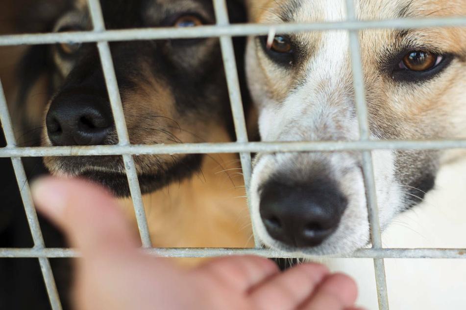 Volle Tierheime nach Corona? Welle von Haustier-Rückgaben befürchtet!