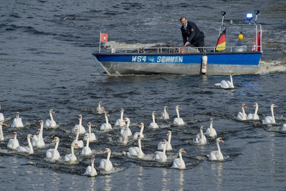 Bislang elf Fälle von Vogelgrippe in Hamburg