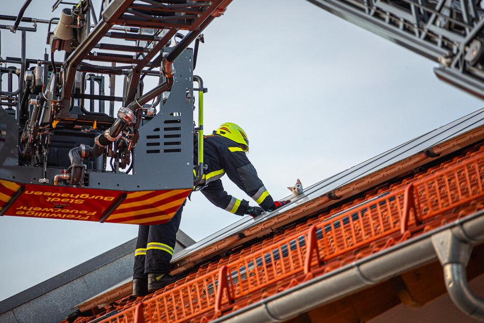 Ein Feuerwehrmann gelangte über eine Drehleiter zum eingeklemmten Kater.