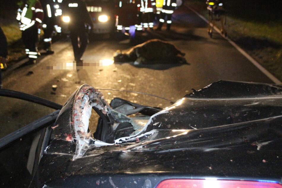 Zwei Tiere ließen bei dem Unfall ihr Leben, eine Autofahrerin wurde schwer verletzt.