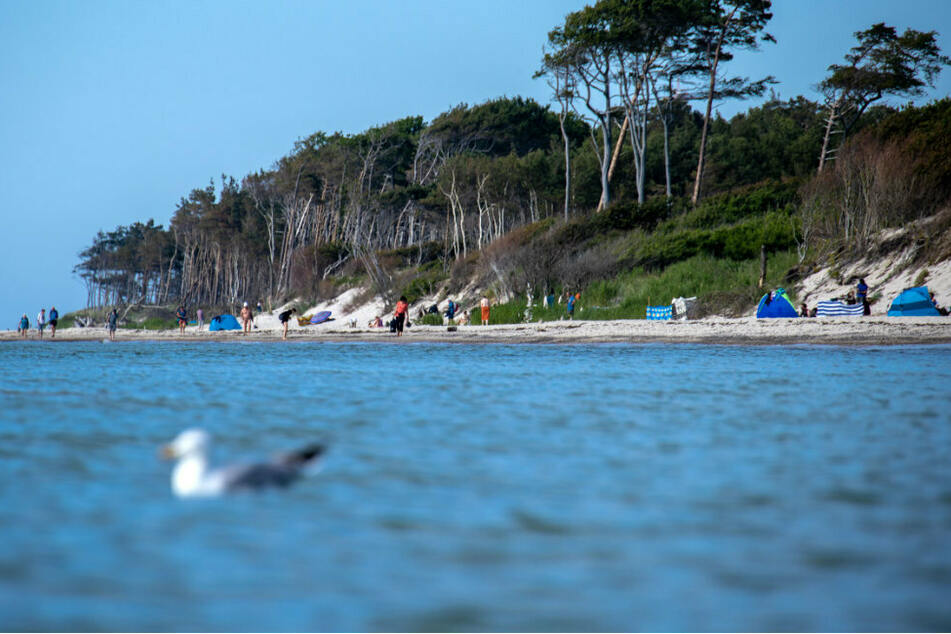 Möwen schwimmen auf der Ostsee vor dem Weststrand auf der Ostsee-Halbinsel Fischland-Darß-Zingst. (Symbolbild)
