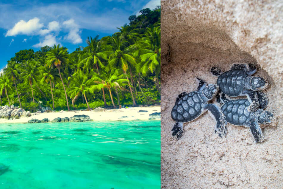 Turtles take over Thai beaches thanks to coronavirus crisis