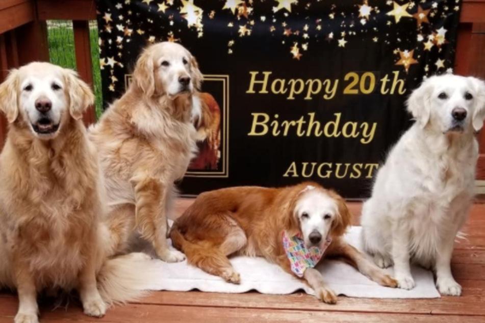 Augie (3.v. rechts), feiert gemeinsam mit Hunde-Kumpels den 20. Geburtstag.