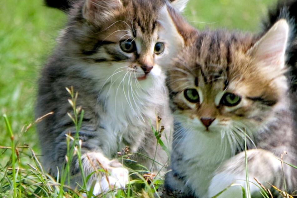 Herzlos! Lebende Katzenbabys an Bundesstraße einfach wie Müll weggeworfen