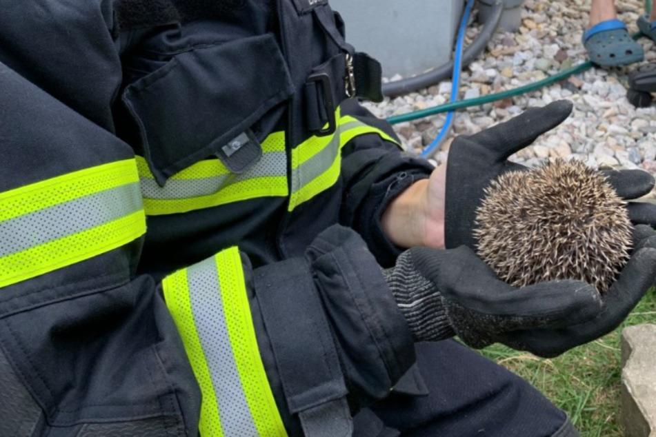 Die Rettung hat die Freiwillige Feuerwehr übernommen.