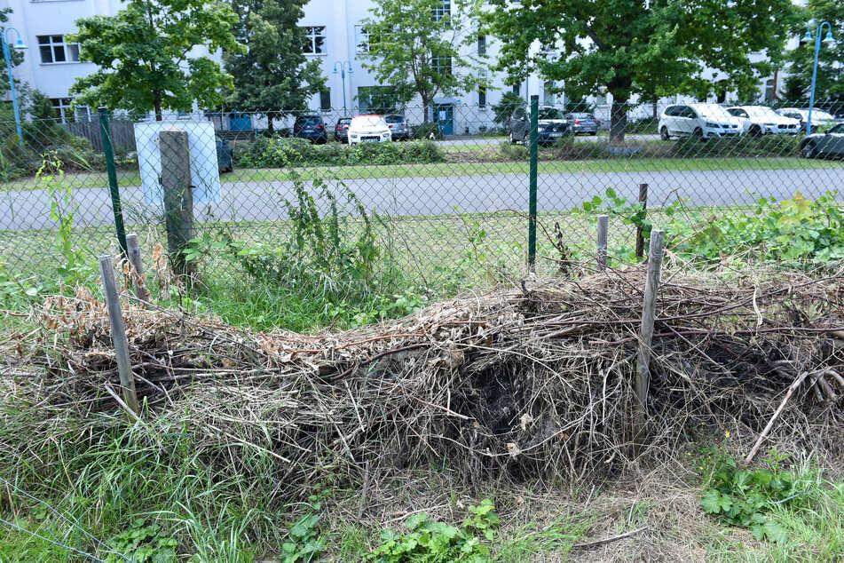 Eine Totholzhecke unterstützt die natürlichen Feinde der Nacktschnecke.