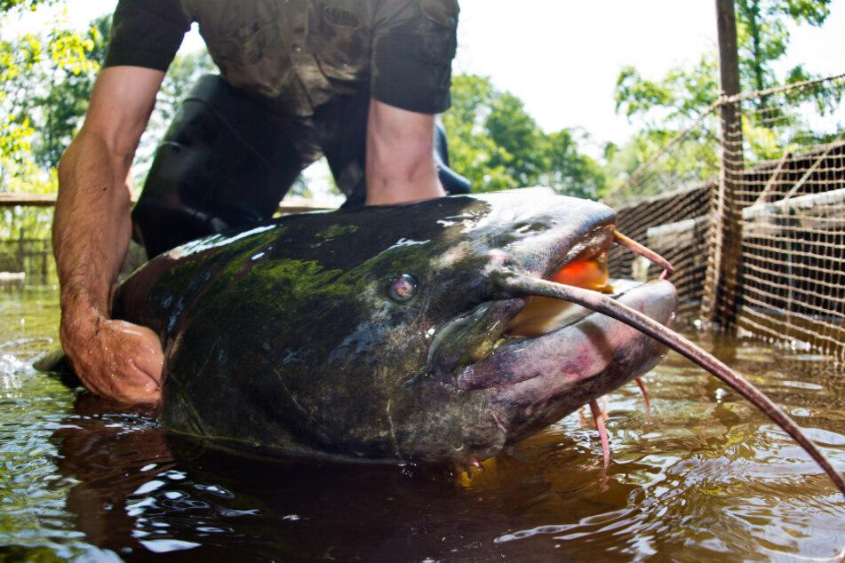 Fische, Schlangen, Krebse: Diese Tiere tummeln sich in Bayerns Badeseen
