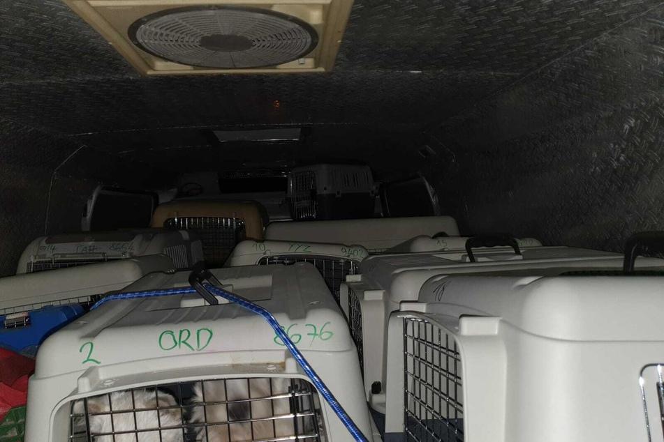 Die Tiere lagerten in Container-Boxen, hatten nach 24 Stunden kein Wasser und kein Futter mehr.