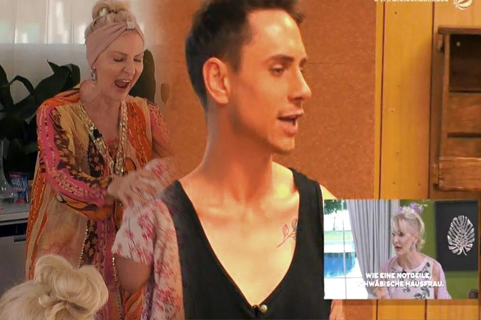 """Big Brother: Nach """"Promis unter Palmen"""" - Désirée Nick landet im Container und einer draußen!"""