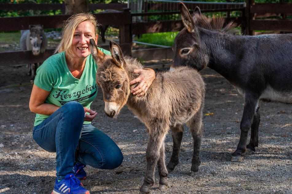 Zoo-Chefin Bärbel Schroller (43) knuddelt das vier Wochen alte Mini-Eselfohlen Chucko.