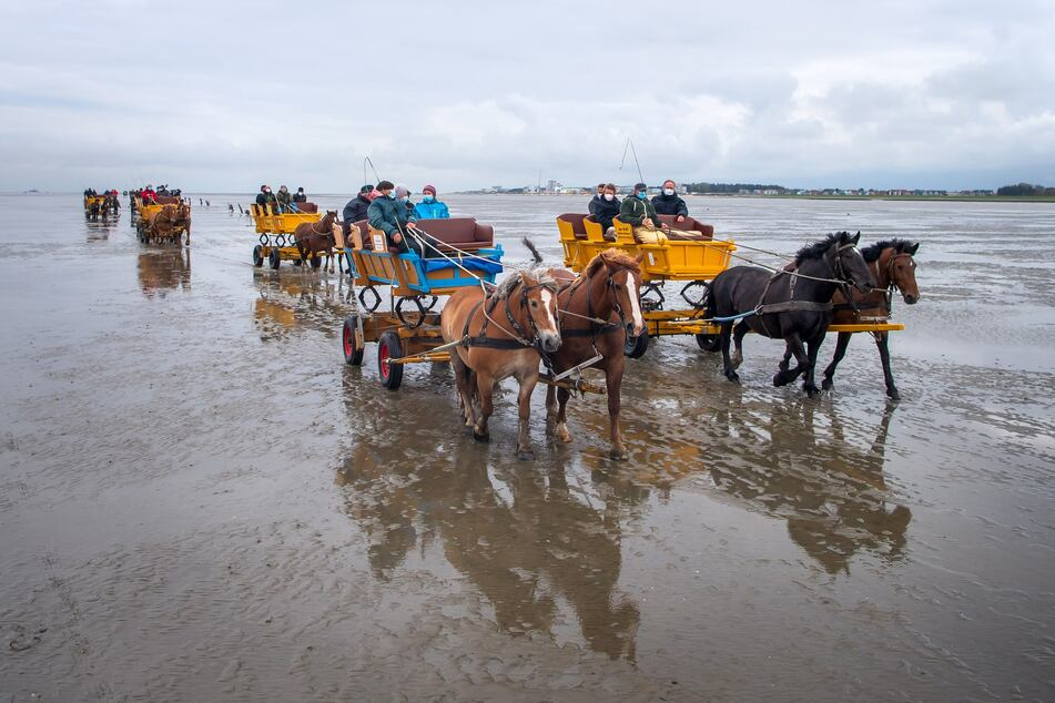 Pferdekutschen fahren durch das Watt.