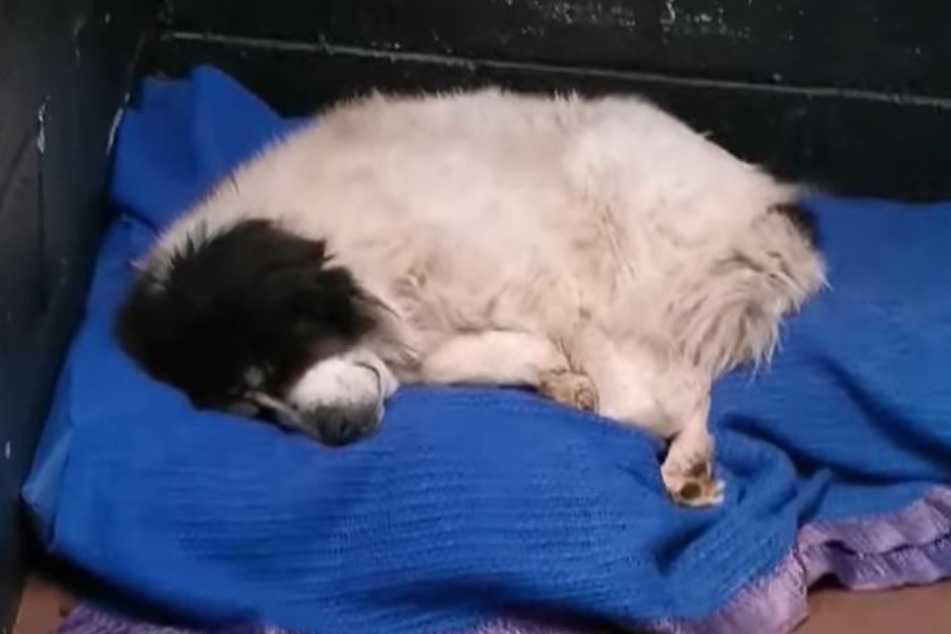 Endlich Ruhe: Derek traut sich jetzt in sein Bett.
